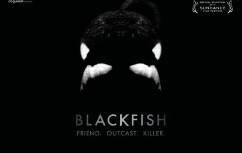Blackfish: Killer Whales or Killer People?