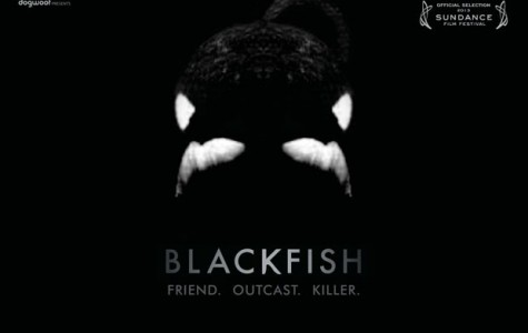Blackfish: Killer Whales or Killer People?