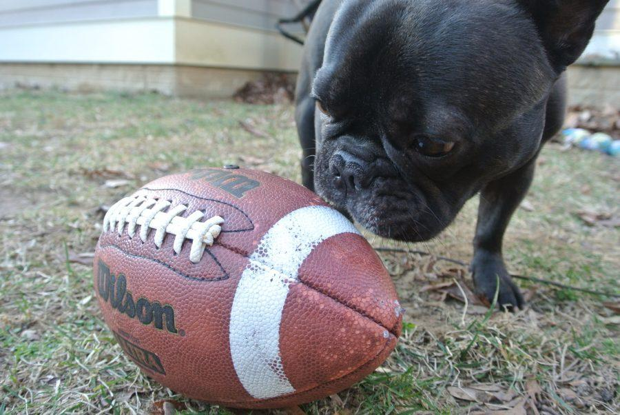 The+Puppy+Bowl+is+a+fun+game+for+everyone+to+watch