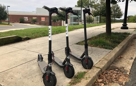 Bird Scooters: Will They Fly?