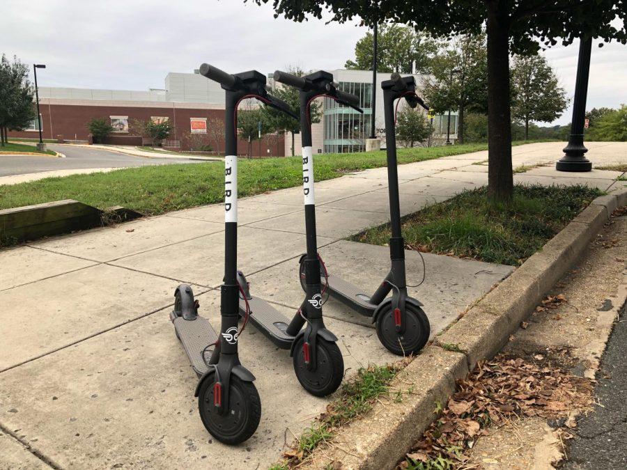 Bird+scooters+have+been+found+on+Yorktown%27s+campus.+