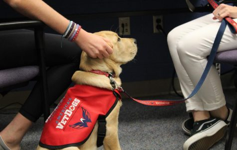 Don't Stop Retrievin': Washington Capitals Get Team Dog